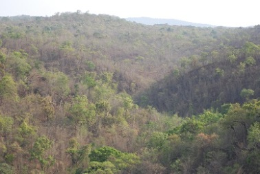 Vast expanse of Forest in Hills
